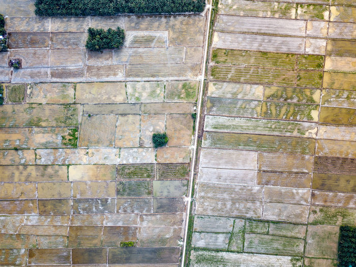 Aerial Photo - Paddy field, Agriculture Aerial View Aerial Photography Aerial Shot Aerial Landscape EyeEm Selects EyeEm Best Shots High Angle View High Altitude Pattern Lines River Road Paddy Field Sunset Palm Tree Plantation Agriculture Malaysia