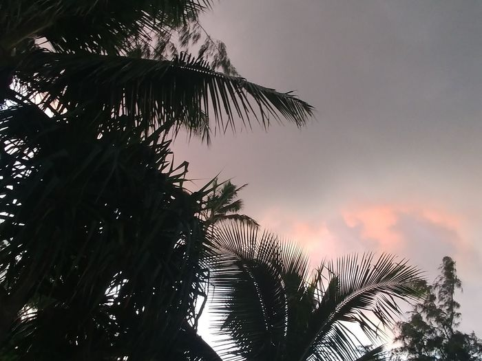 the shine No Filter Thank You Cloud Speak Faces Do You See What I See? Cloud Speak Who WOW Tree Palm Tree Sky Tropical Climate Plant Sunset Silhouette Beauty In Nature Tranquil Scene Idyllic Cloud - Sky Outdoors Scenics - Nature
