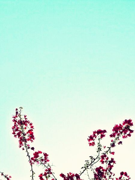 Flowers Red Relaxing Sky Blue Sky Nature Nature Photography Pink