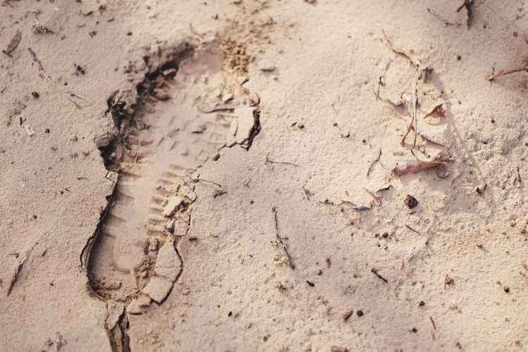 Track in the sand EyeEm Selects Sand Land High Angle View FootPrint Nature Beach No People Day Dirt Track - Imprint Tranquility Outdoors Print