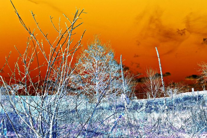negative art - abstract Nature Photography Abstract Abstract Photography Abstract Art Art Art is Everywhere Surreal Surrealist Art Negative Negative Effect Negativeart Landscape Landscape_photography Landscape_Collection Backgrounds Sunset No People Outdoors Nature Day Sky