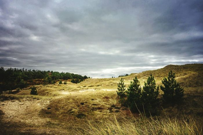Dünenlandschaft auf Amrum Outdoors Perfect Nature Landscape Wanderlust Wonderful World Of Photography 🤗 Clouds Nature Perfect EyeEm Nature Lover Wonderful Day EyeEm Selects EyeEm Gallery Outdoors Dunes Amrum Insel Insel Amrum Cultivated Land Autumn Dramatic Sky Atmospheric Mood Sky Only Growing