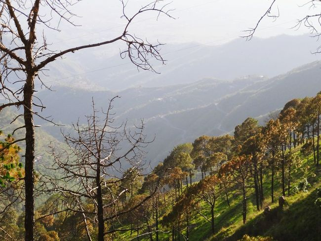 Protecting Where We Play Kasauli Hills Travel Love Habitat Crowded Pollution