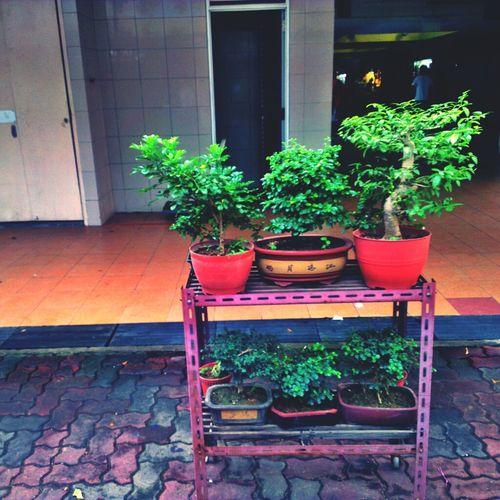 Bonsai Life Around Me