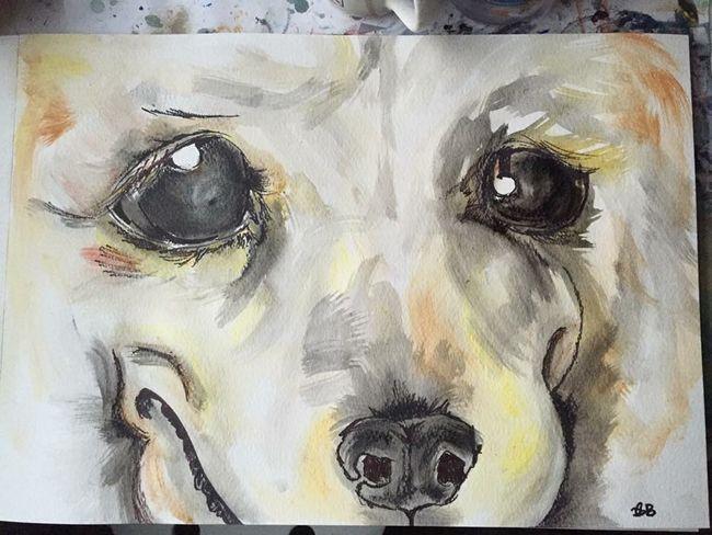 Those eyes! Sucker Puppyeyes Cute Animallovers Goldenretriever Dogs ArtWork
