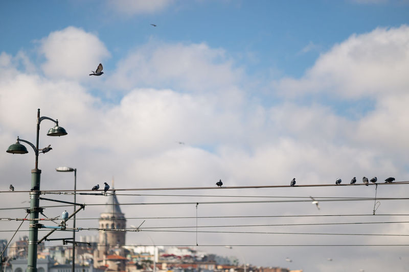 Birds on a Wire & the Galata Tower Birds On A Wire Blur Bokeh Cable Cloud Cloud - Sky Cloudy Day Eminönü Focus On Foreground Galata Tower Galatakulesi Istanbul Istanbuldayasam Lifestyles Low Angle View My Favorite Photo Natanomalous.com Nature No People Outdoors Color Palette Colour Of Life