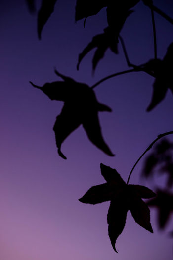 Close-up of silhouette plant against sky during sunset