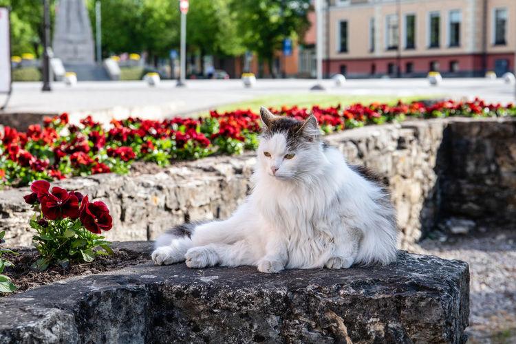 Cat relaxing on white flowering plants