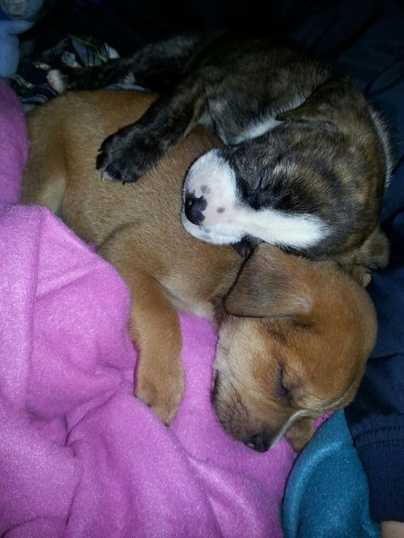 Everyday Joy Taking Photos Enjoying Life Puppies! Our new puppies