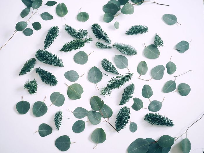 Leaf Close-up High Angle View No People Eucalyptus Fir Tree Fir Branch Simplicity Minimalism Flowers Close Up Freshness Stem Flower Arrangement Botany Botany Close Up Eucalyptus Leaves Fragility Indoors  Petal Table Close Up Flower Close Up Flora Green Green Leaves Greenery Fresh On Market 2017