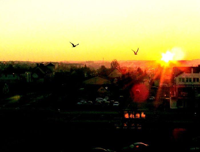 Elbląg Polska poranne słońca pozdrawiam serdecznie wszystkich znajomych w poniedziałek i życzę małego tygodnia 😎 City. Wschódsłońca