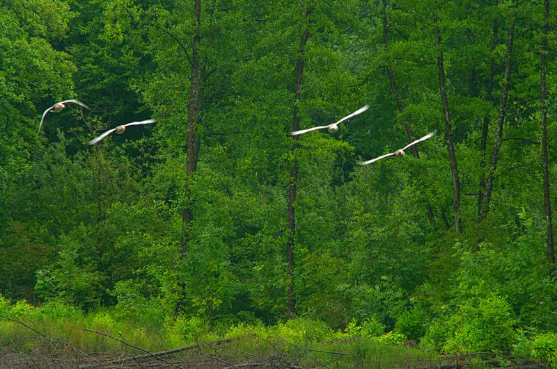 Bird flying over a forest