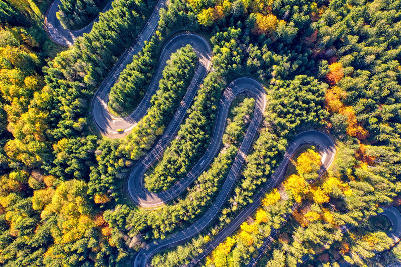 Directly above shot of trees and winding road