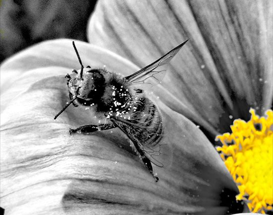 Nature_collection Insect Abeille Fleurs Bee Huaweip10plus Huaweiphotography Flower Close-up One Animal Day Animal Themes No People Nature Fragility Animals In The Wild Outdoors Flower Head