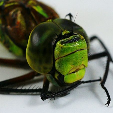 Insect Close-up One Animal Animal Wildlife Stack Animal Themes Stereo Indoors  No People Day EyeEmBestPics Focus On Foreground EyeEm Nature Lover Nature Eyemphotos Dragonfly Macro Photography