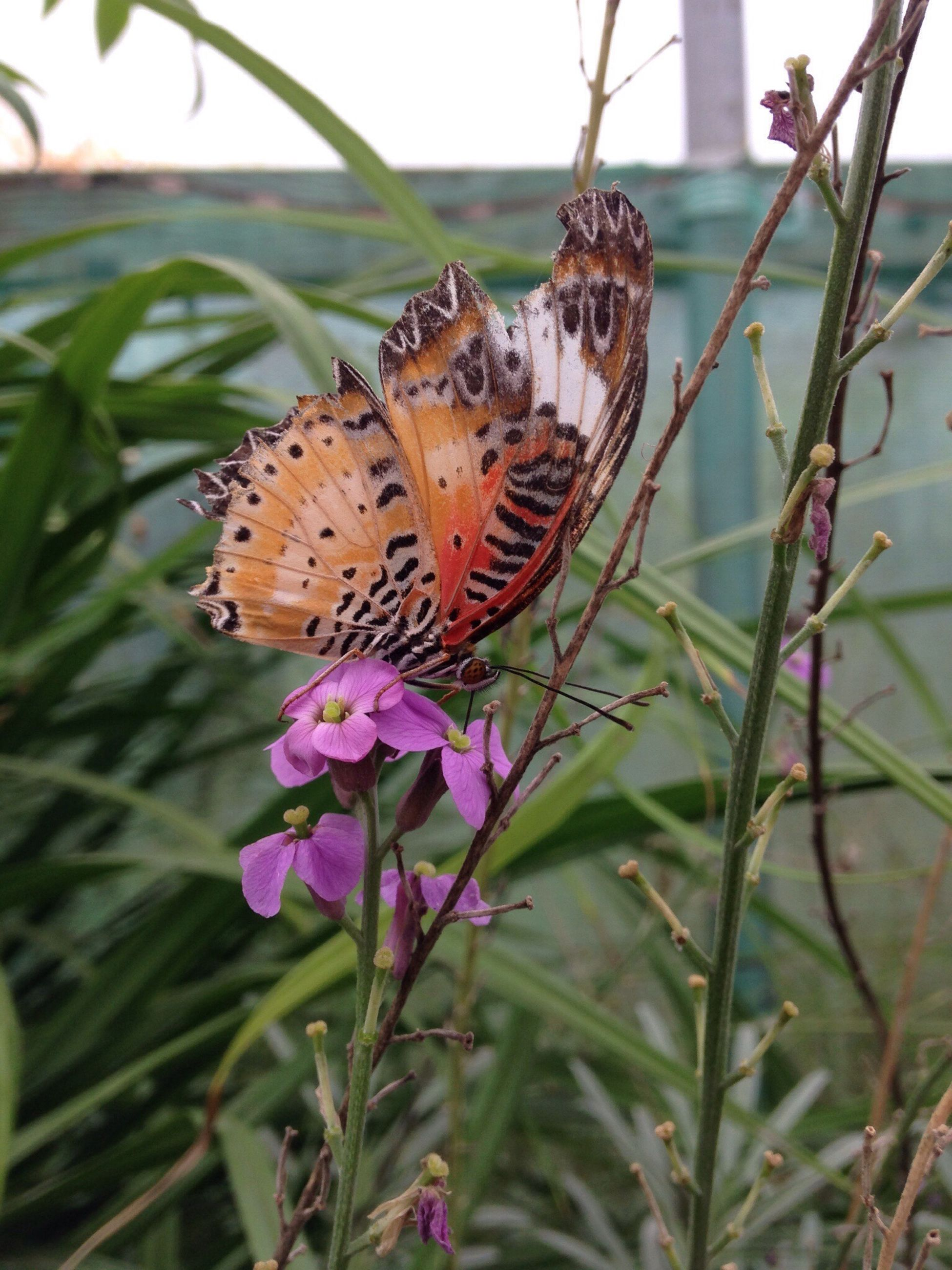 one animal, animal themes, animals in the wild, insect, flower, wildlife, butterfly - insect, butterfly, plant, fragility, focus on foreground, beauty in nature, growth, close-up, animal markings, nature, freshness, pollination, animal wing, natural pattern