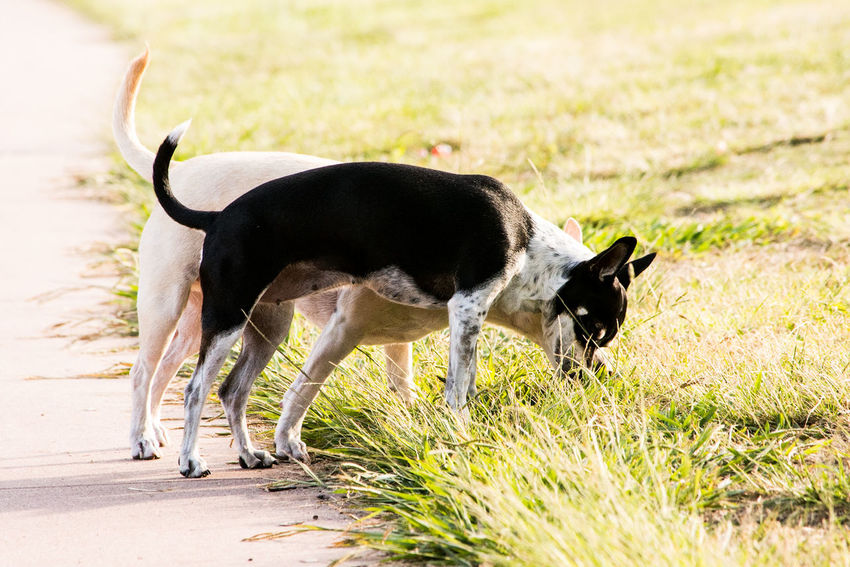 Sniffing Pets EyeEm Selects Pets Young Animal Cute Walking Side View Animal Themes Grass Animal Hair Puppy Dog
