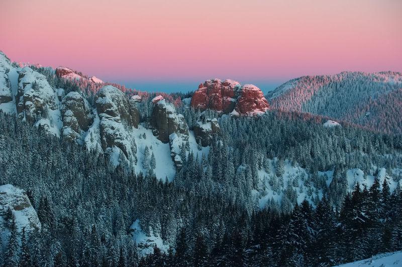 Ciucas Mountains Cold Nature No People Pine Trees Sky Snow Sun Sunset Winter