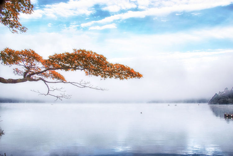 Hakone, Japan Tree Beauty In Nature Tranquility Water Tranquil Scene Scenics - Nature Sky Lake Cloud - Sky Fog Non-urban Scene No People Nature Waterfront Day Reflection Idyllic Outdoors #japan #hakone #ashi