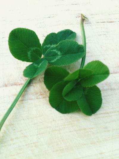Happy St. Patrick's Day! 🍀 Clover St. Patrick's Day Happy St. Patricks Day 4 Leaf Clover Four Leaf Clover Six Leaf Clover Tadaa Community Nature