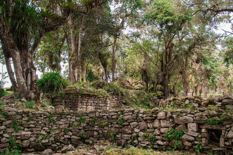 Tree Plant Nature Forest Day Architecture No People Land Tranquility Beauty In Nature Outdoors Solid Scenics - Nature Non-urban Scene Green Color Stone Material Tranquil Scene Park Built Structure Landscape Stone Wall Ancient Ancient Civilization Kuelap