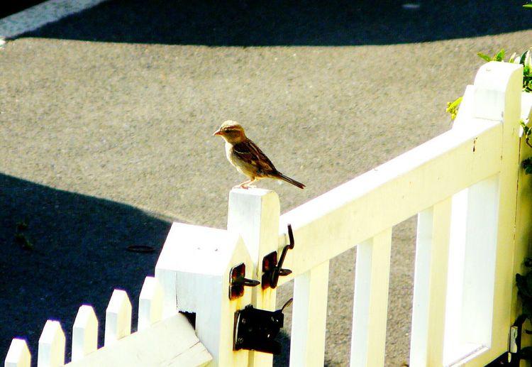 Bird Photography Purching On Gate