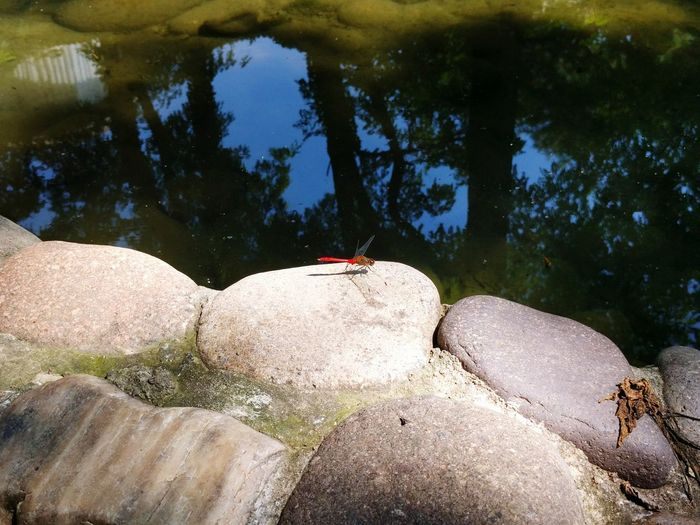 Red dragonfly Relaxing First Eyeem Photo