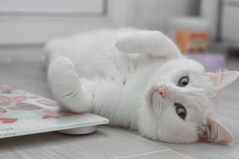 Close-up of cat lying on table