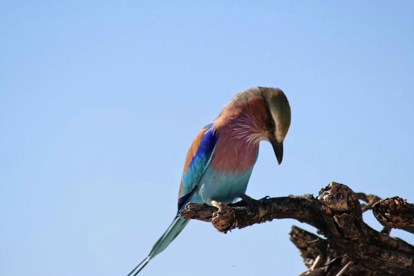 Taking Photos Traveling Bird Photography Africa Mario's Namibia Etoshapark Namibia