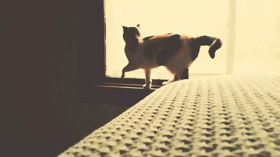 Old friends, apart but not forgotten. Calicocat Meow Catsarelife Purrfect OldCat Visiting New York Memories Dailycat Oldfriends Window