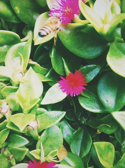 Petal Flower Green Color Growth Fragility Beauty In Nature Plant Nature Green Color Leaf Freshness Flower Head Close-up Day Outdoors No People Springtime Blooming