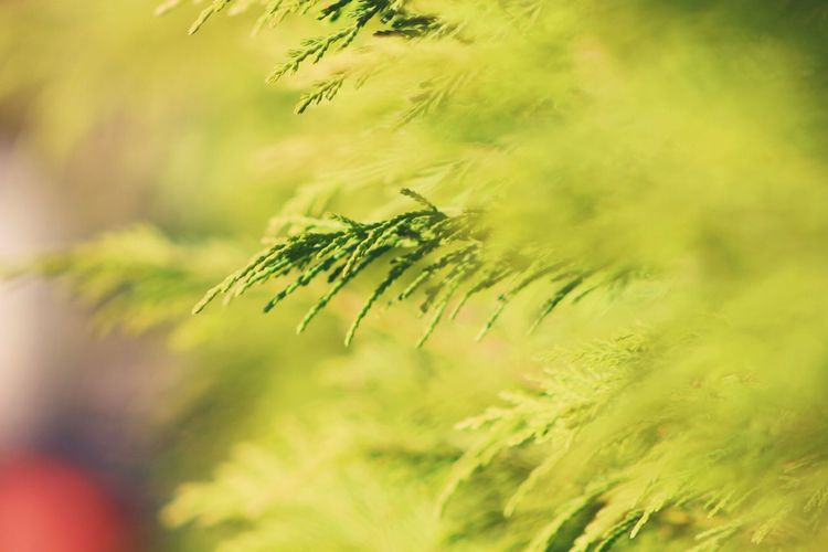 Nature Close-up Plant No People Growth Day Outdoors Grass Photosynthesis Scenics Throughmyeyes Through The Lens Photography Canon Canonphotography Explore Beauty In Nature