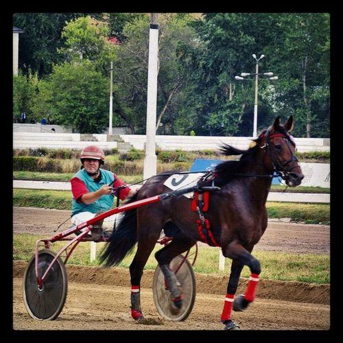 Hippodrom Horseracing Races бега скачки ипподром москва moscow_life instamoscow letovmoskve