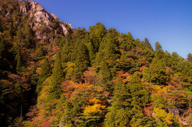 Scenic view of mountains and trees against sky