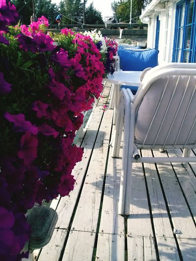 Relaxing Hanging Out Flowers Good Times Mobile Photography Coffee ☕ Colors Riverside Summer Sunny☀ Colour Of Life Summer2015 Petunias Riverboat Belgrade Novibeograd Blokovi