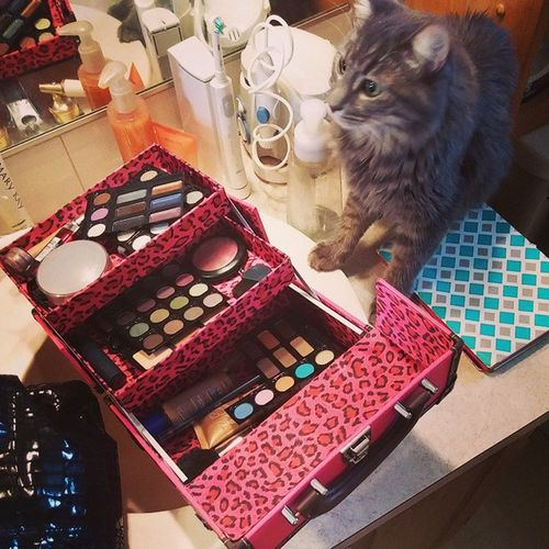 I just 💚 my Ultra train case, it was only $20! Like if you love Jazmin's little photo bomb! Sweatpink Ulta Kitty