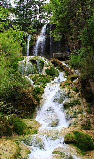 Waterfall Tree Flowing Water Beauty In Nature Scenics - Nature Forest Nature No People Outdoors Power In Nature