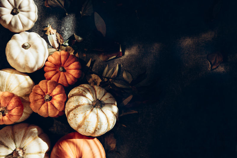 Pile of different pumpkins with strong shadows. halloween or thanksgiving holiday backgrounds