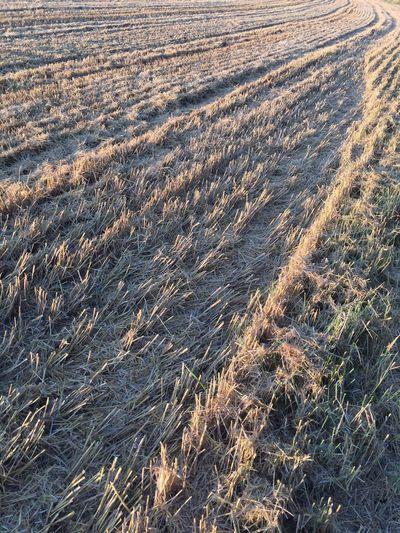 Field Stubblefield