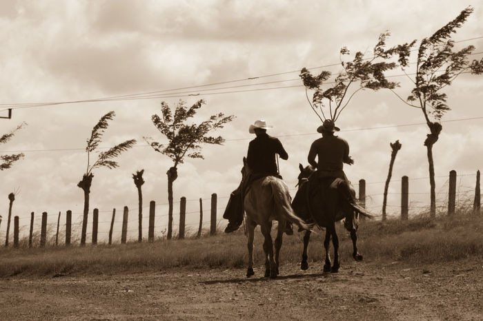Once Upon a Time in the Cuban Prairie… Animal Themes Beauty In Nature Cloud - Sky Cuba Cuba Collection Day Domestic Animals Fence Horse Horseback Riding Mammal Monochrome Nature On The Road Outdoors Pasture Riding Road Trip Sky Through Windshield Tree Two People Working Animal