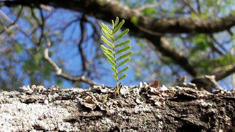 Growth Nature Focus On Foreground Plant No People Close-up Day Outdoors Tranquility Green Color Beauty In Nature Leaf Fragility Foto Nature Photography Fotonatural Fotografia First Eyeem Photo Nature Fotography Camaras Photo Zoo Green Color Tranquility