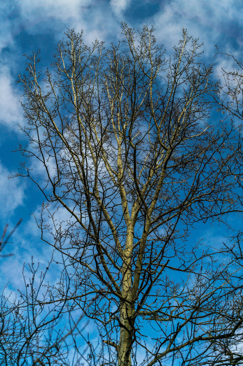sky, low angle view, tree, nature, blue, outdoors, branch, cloud - sky, day, no people, beauty in nature, bare tree, growth, scenics