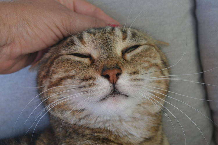 Cat Close-up Day Domestic Animals Domestic Cat Feline Holding Human Body Part Human Hand Indoors  Mammal One Animal One Person Pets Real People Relaxing Whisker Let's Go. Together. Love Yourself