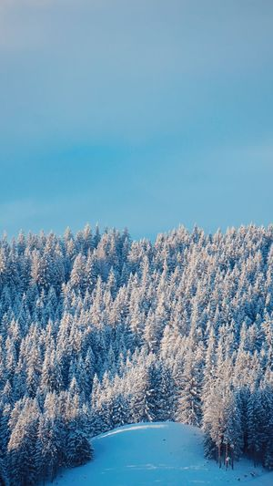 winter EyeEm Selects Blue No People Winter Sky Day Outdoors Defocused Nature