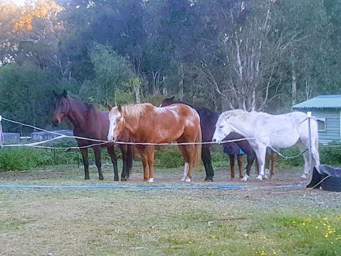 """Waiting for Dinner!"" Afternoon In Autumn Paddock Property Horses Trees And Nature Colours Standing Rural Scene Horse Livestock Paddock Hoofed Mammal Pasture Pony"