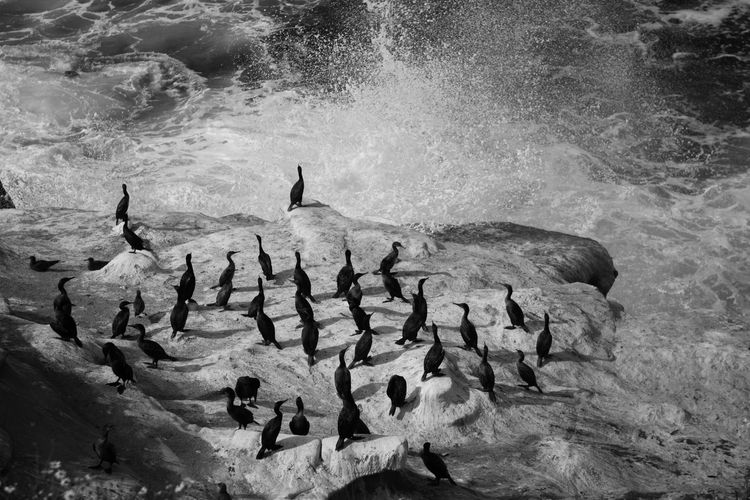 High Angle View Of Wave Splashing On Rocks With Cormorants