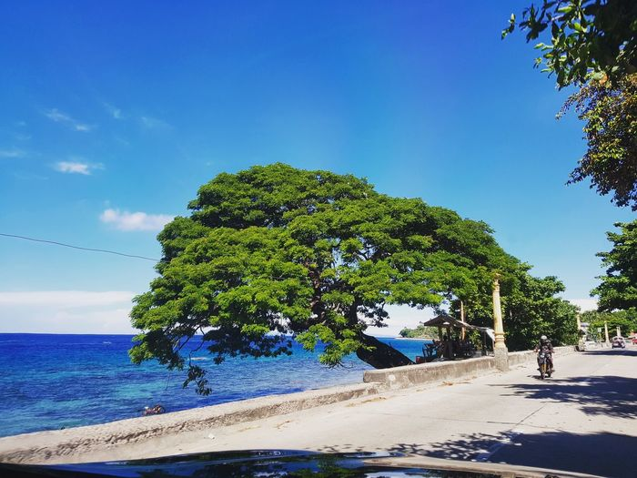 Tree Blue Sky Day Nature Beauty In Nature Outdoors Water Scenics Growth No People Beach Sea Beachphotography Beach Life