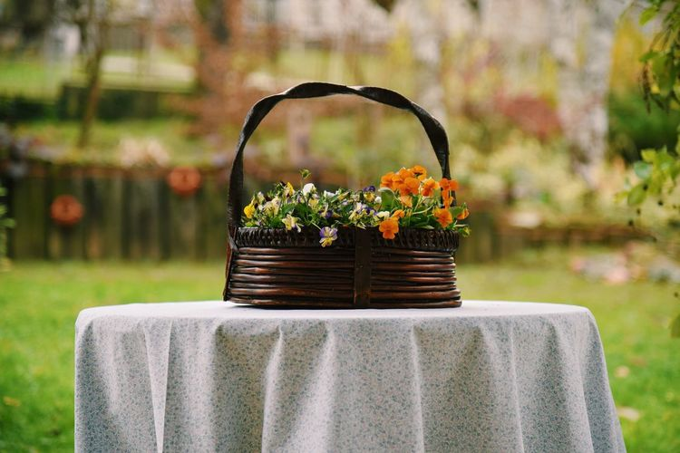 Close-up of potted plant in basket on table