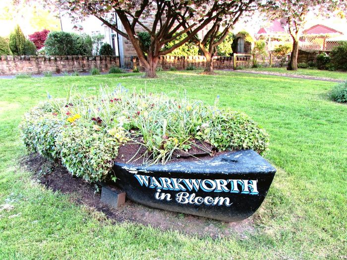 Flowerbed Boat Northumberland Warkworth Sunnyday☀️ Sunset_collection Tree Text Grass Green Color Blooming
