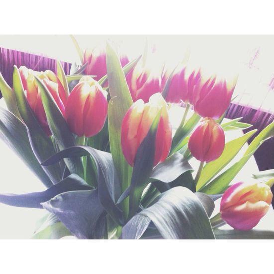 Flowers Taking Photos Relaxing VSCO